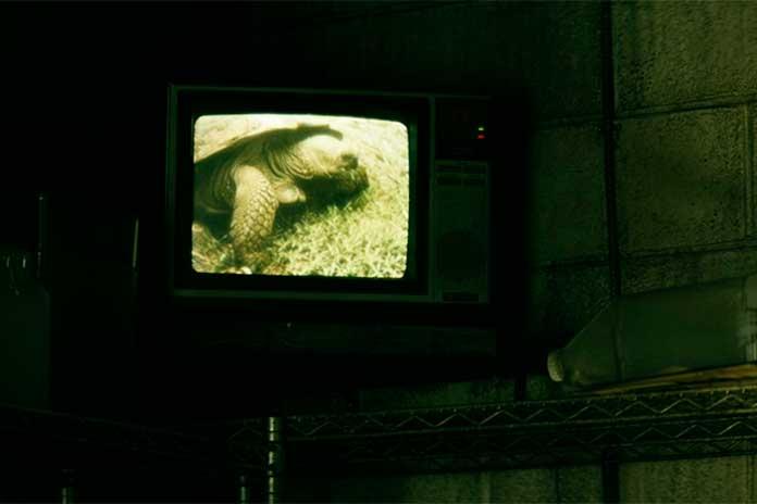 Documentário sobre tartarugas série The Boys